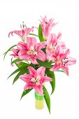 Bouquet Of Fresh Pink Lily Flowers
