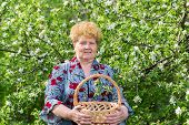 Mature Woman With Wicker Basket In The Spring Garden
