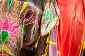 stock photo of tusks  - Colorful Elephant - JPG