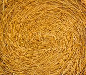 Round Straw Bale. Close-up Background