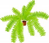 house ferny plant