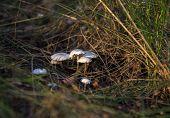 Colony Of Fungi