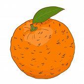 orange in vector