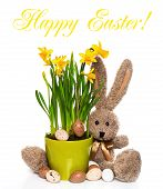 Easter Decoration With Eggs, Narcissus Flowers And Bunny
