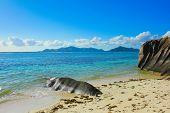Wallpaper Beach Coconut