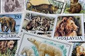 Bears on stamps