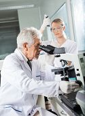 Senior male scientist using microscope with colleague working in background