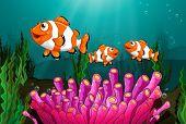 Illustration of clowfish under the sea