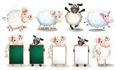foto of sheep  - Illustration of many sheeps with different poses - JPG