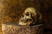 Still life with ideas about Art skulls