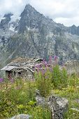 Abandoned chalet and wild flowers in Val Ferret in Italy. The area is a stage of the popular European tour around Mont Blanc, which passes through France, Italy and Switzerland.