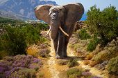 African elephant walking on the road