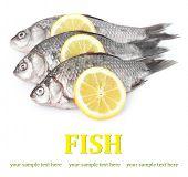 Fresh fishes with lemon isolated on white