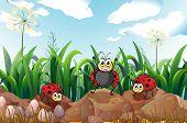 Illustration of the three ladybugs above the rocks