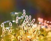 Nice summer flower's meadow - soft focus photo