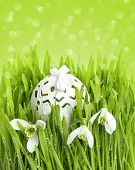 Snowdrops And Egg Decoration In Green Grass