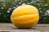 Ripe Melon On The Table