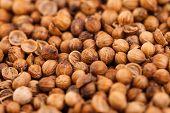Coriander Seeds Extreme Closeup