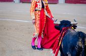 pic of bullfighting  - A bull in front of the bullfighter - JPG