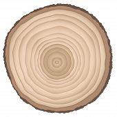 Cut of a tree