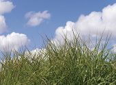 Closeup of rough grass with cloudy blue sky in background