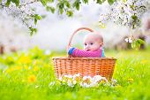 Adorable happy smiling baby boy in basket in spring apple tree