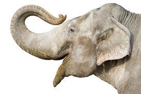 foto of gentle giant  - head of elephant - JPG
