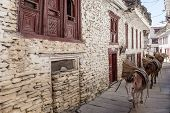 picture of mustang  - Donkey caravan through Marpa Village Mustang Nepal - JPG