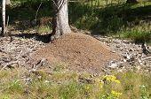 An anthill