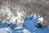 Rocks And Deciduous Forest In Winter