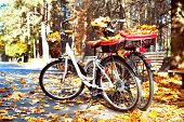 stock photo of riding-crop  - Two walking bicycles in autumn park with yellow tree leaves in basket - JPG