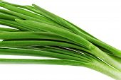 stock photo of bine  - Young onion on white background - JPG
