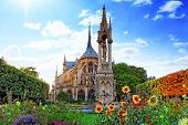 foto of notre dame  - Notre Dame de Paris Cathedral garden with flowers - JPG