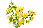 stock photo of cruciferous  - Bouquet Marsh Marigold Yellow wildflowers in vase isolated on white background  - JPG