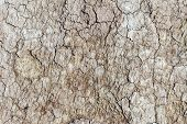 Textured Background Of Dry Cracked Earth Surface. Drought In Summer