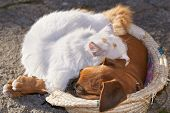 pic of sleeping  - A small cat and a small dog sleeping together as good friends - JPG