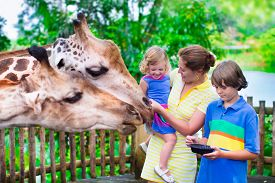 image of zoo  - Happy family young mother with two children cute laughing toddler girl and a teen age boy feeding giraffe during a trip to a city zoo on a hot summer day - JPG