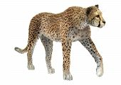 picture of cheetah  - 3D digital render of a big cat cheetah isolated on white background - JPG