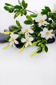 stock photo of fukushima  - Lying down branch gardenia with therapy stones  - JPG