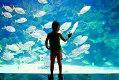 image of shoal fish  - little boy kid watching the shoal of fish swimming in oceanarium - JPG