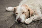 stock photo of homeless  - Homeless dog sleep on the side street - JPG