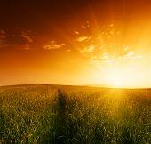 campo de hierba y puesta del sol