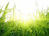 green summer grass and sun