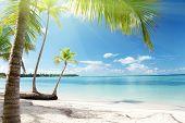 Mar Caribe y Palmas de coco