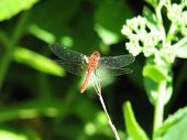 Dragon Fly In Summer poster