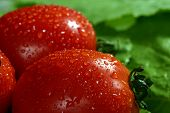 Tomato On Green Colza