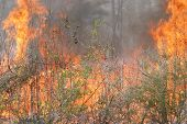 forest fire close up