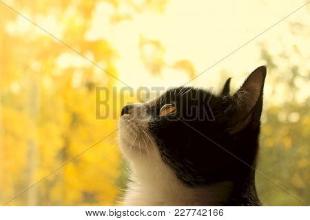 poster of Cropped Shot Of A Black Cat. Cat Looking To The Side. Cat Close-up, Yellow Blurred Background.cat. T