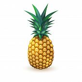 Pineapple Realistic Fruit. Vector Illustration. 3d Ripe Tropical Exotic Juicy Fresh Food, Vitamin He poster