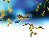 stock photo of monoclonal  - Monoclonal antibodies - JPG